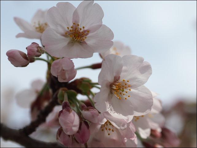 写真 2014-03-29 13 30 04