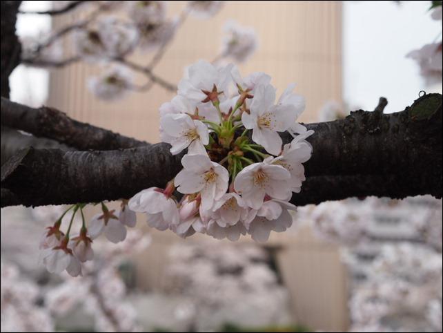 写真 2014-03-31 17 15 16