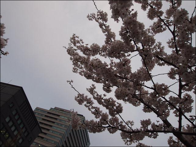 写真 2014-03-31 17 48 16