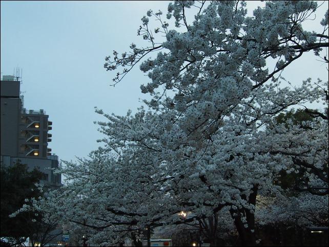 写真 2014-03-31 18 03 40