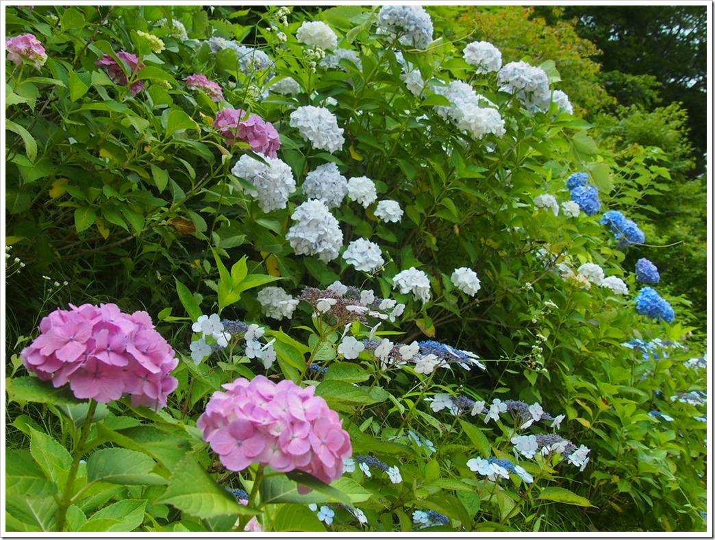 写真 2014-06-21 10 08 50