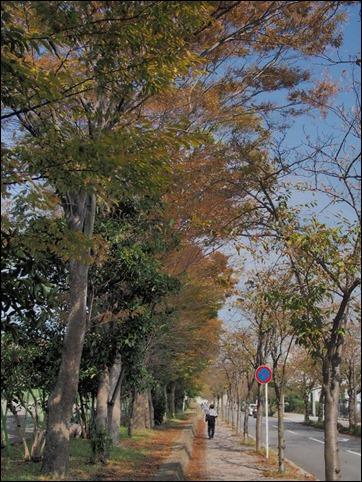 写真 2014-10-25 11 45 15