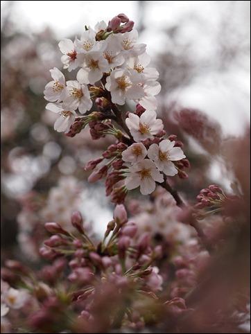 写真 2014-03-29 12 41 10